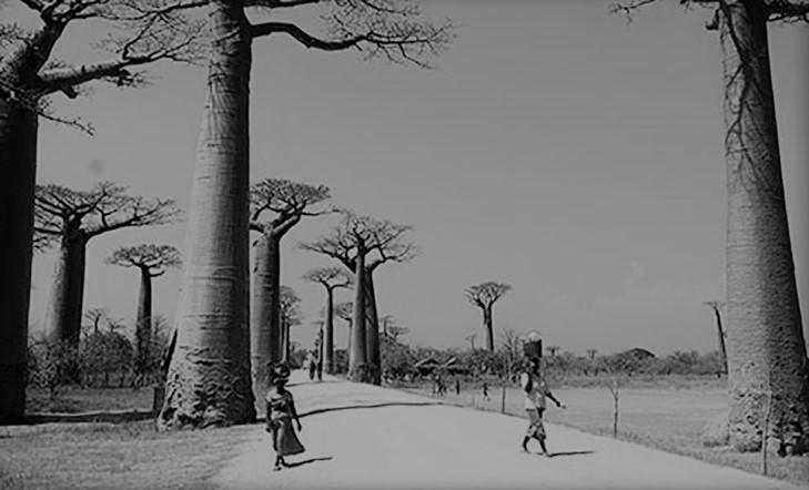 Madagaskar:  Indiako  ozeanoko  irla  handian  barrena